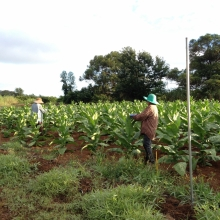 Farmers in the field